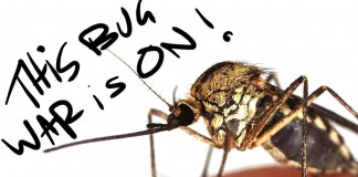 MosquitosBloodEditThumb2